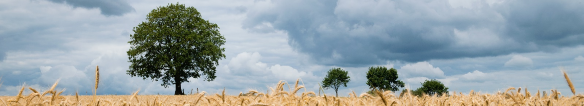 Sowing a Field to Cultivate: Driving Sales via Contact-Based Leads in Salesforce